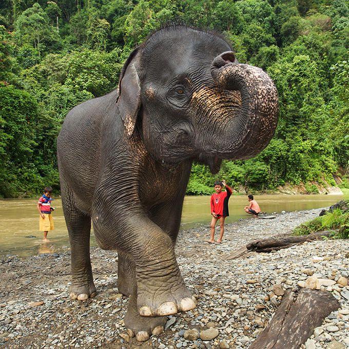 Elephants and Children at Tangkahan, Sumatra, Indonesia