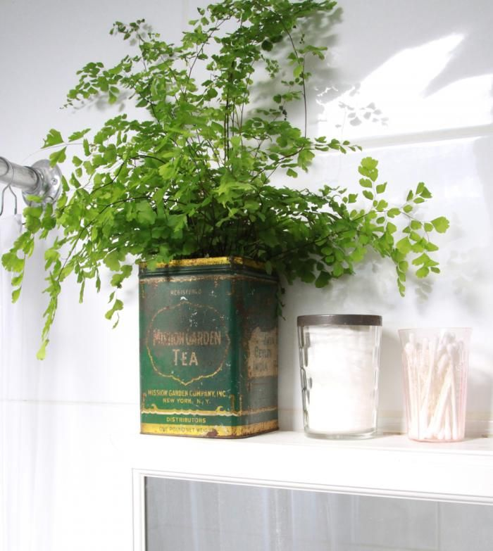 Best Bathroom Plants Ideas On Pinterest Plants In Bathroom