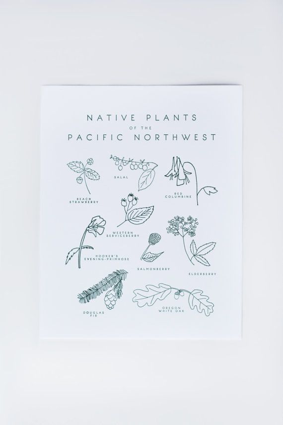 :: DESCRIPTION ::  This letterpress art print features a hand-drawn collage of nine native plants found in the Pacific Northwest. The print comes with