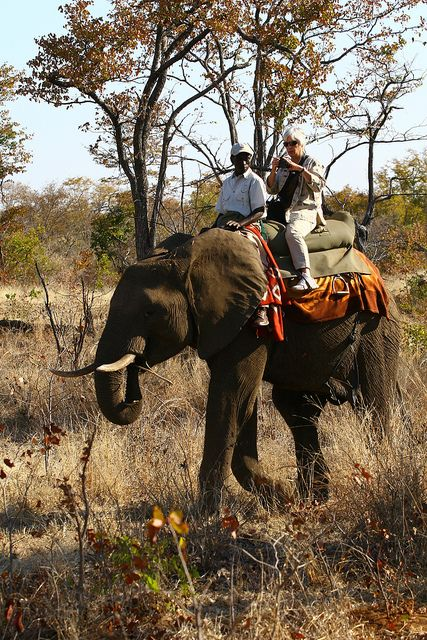 Elephant Back Safari, Victoria Falls by Nomad Africa Adventure Tours, via Flickr