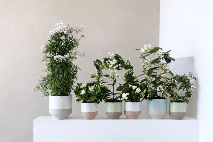 Plantes à fleurs blanches : Comment les choisir et les entretenir
