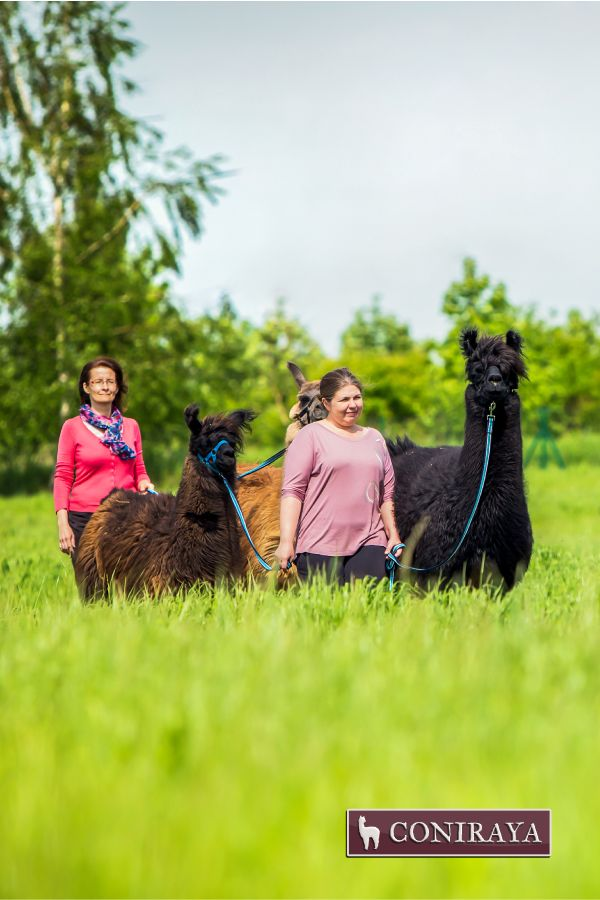 Could it be something better than a walk with #llamas? :) No way! :) #coniraya