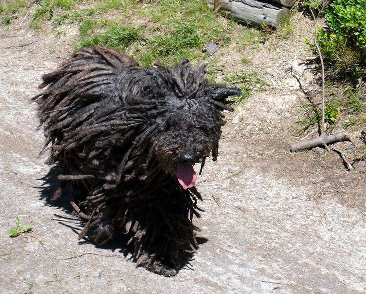 Kutyahűség és szabadság - http://kicsibudoar.hu/kutyahuseg-es-szabadsag/