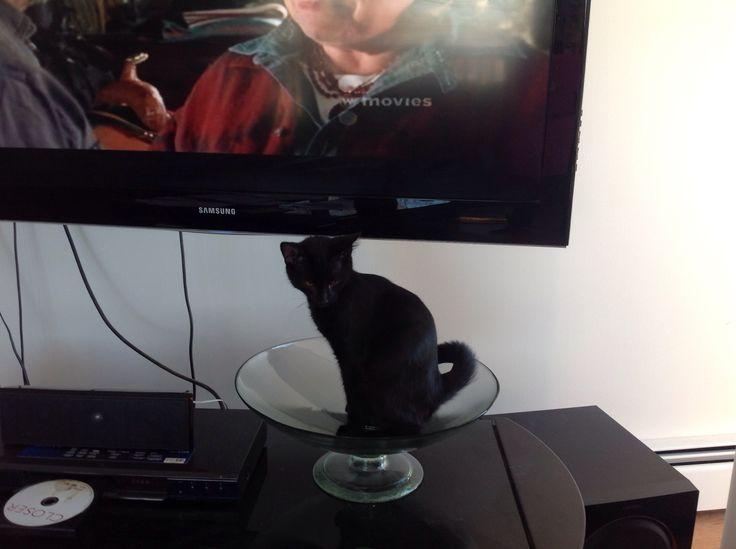 TV Watching.