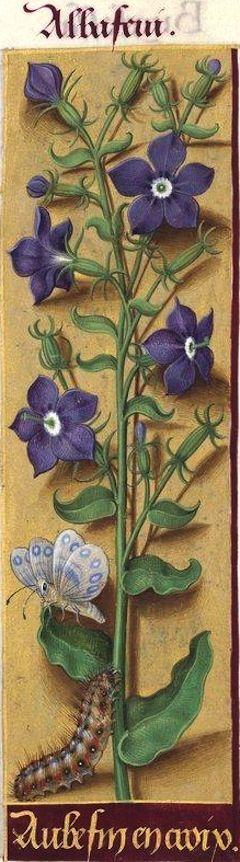 -- Grandes Heures d'Anne de Bretagne, BNF, Ms Latin 9474, 1503-1508, f°89r