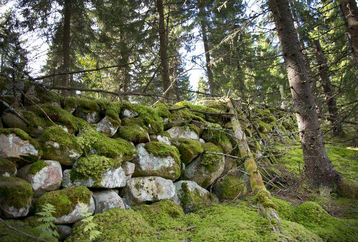 I skogen vid Jätturn naturreservat