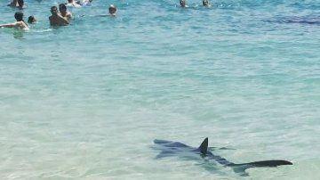 Strand gesperrt: Blauhai-Alarm auf Mallorca