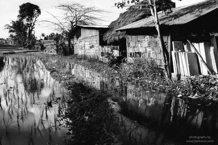 Someone's home that sits right next to a rice paddy field.