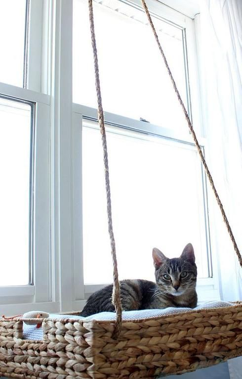 Lit pour chats                                                                                                                                                                                 Plus