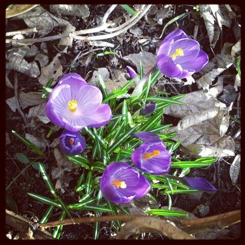 Vroeg voorjaar!!