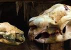 A imagem divulgada pela Universidade New South Wales mostra o crânio de um Nimbadon bebê e adulto. Segundo Karen Black, esses parentes dos atuais fascólomos, animal encontrado na Austrália, tinham o tamanho de uma ovelha e viveram no topo das árvores 15 milhões de anos atrás. A descoberta foi realizada no sítio Riversleigh World Heritage, em Queensland