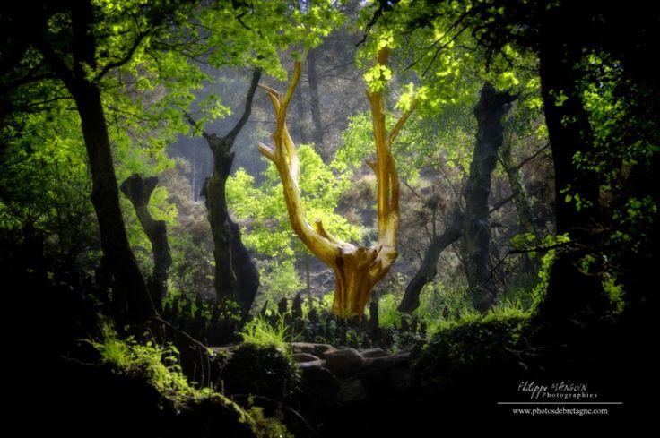 Forêt de Brocéliande - L'arbre d'or, Tréhorenteuc, Morbihan, France.