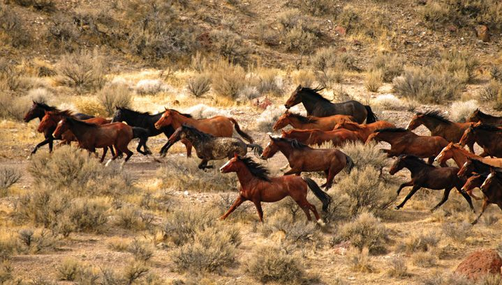 I love running horses!American Travel, Google Search, Hors Pictures, Mustangs Horses, Feral Hors, Native American, Animal, Wild Mustangs Hors, Wild Horses