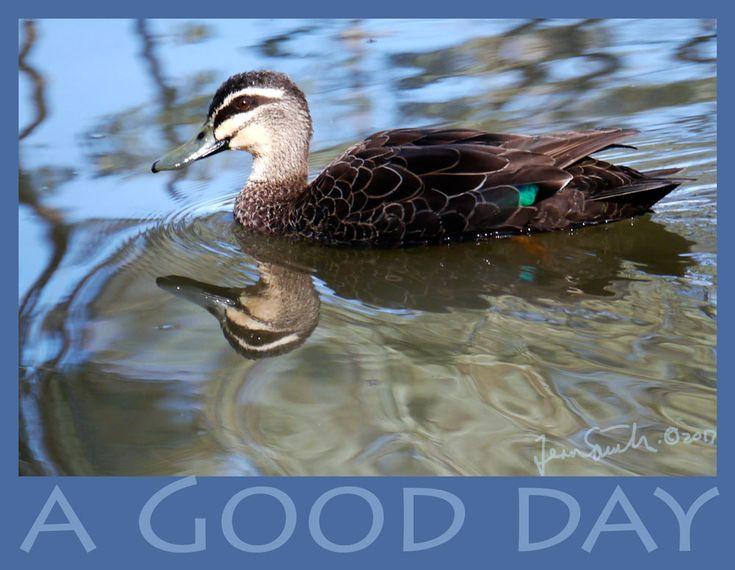 A good day for ducks – FernArtz