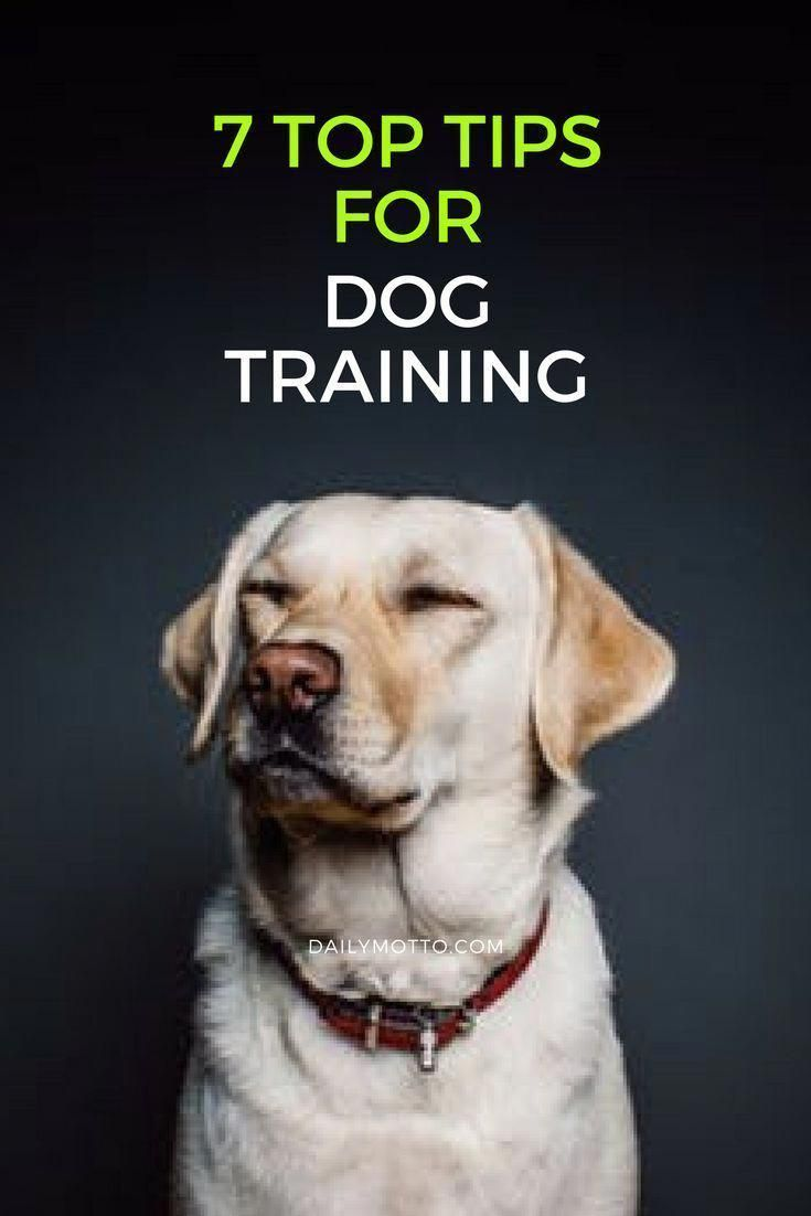 Pin On How To Train A Dog