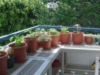 How to Grow Herb Gardens from Seeds. Love the tables made from shutters.