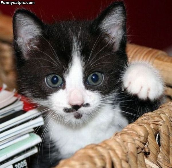 Oh my, it's Johnny Depp kitty!
