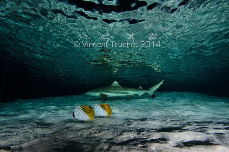 poisson-exotiques-et-requin photo de Vincent Truchet sur DGS