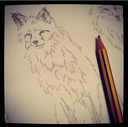 3 Silly Mistakes To Avoid When Drawing Animals #drawing #artist #arttips #fox #drawinganimals #sketch #ruthjoyceart