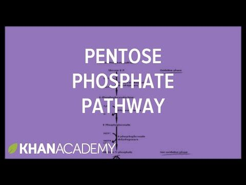 Pentose phosphate pathway - Cyclic structures and anomers | Biomolecules | MCAT | Khan Academy - YouTube