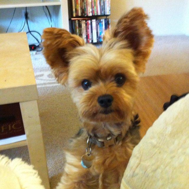 Cute Dog Grooming Salons