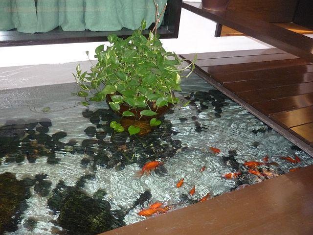 39 best indoor pond images on pinterest indoor pond for Aquarium fish outdoor pond