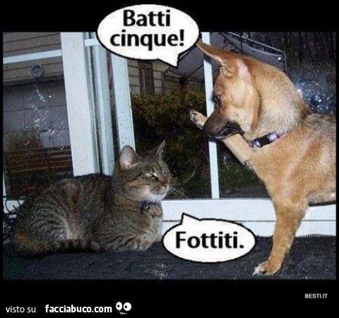 Cane al gatto: batti cinque! Fottiti