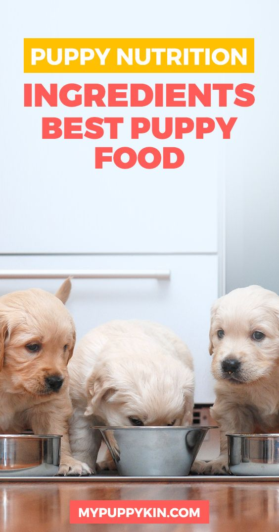 Puppy Nutrition Ingredients Best Puppy Foods And Recommended