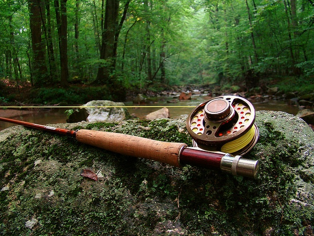 123 best images about been there loved it on pinterest for Best fishing pole for trout
