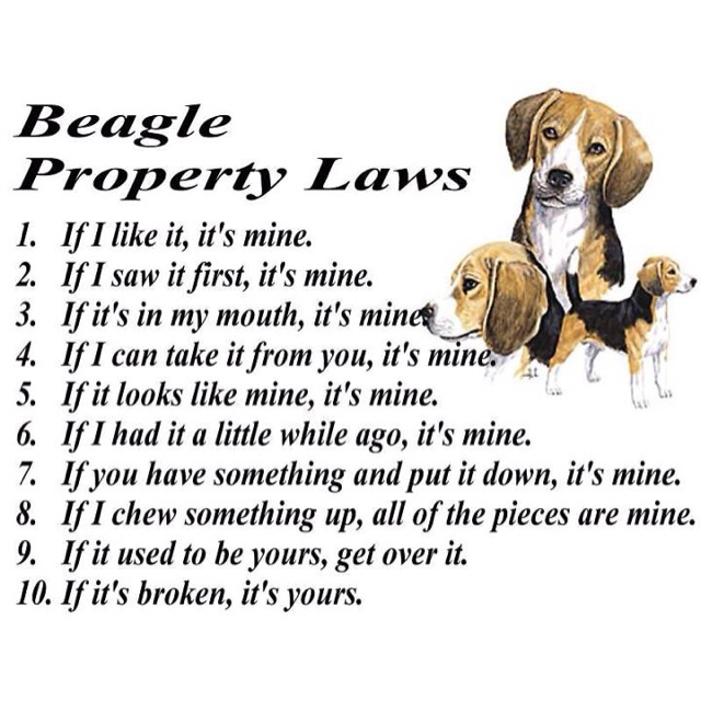 Best i love my beagle images on pinterest dog cat