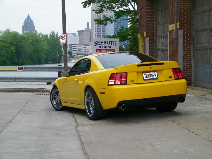 Mustang Nicknamed Terminator