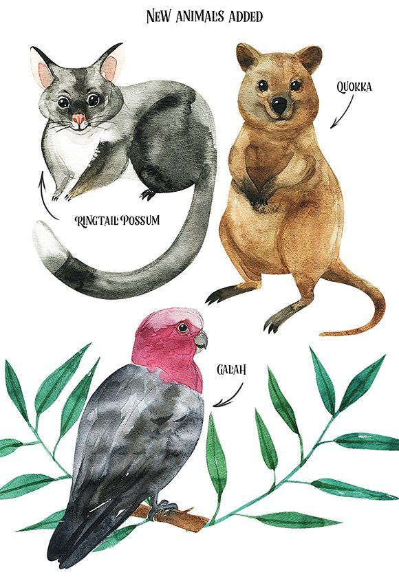 Australian Mainland Illustration Set Kangaroo Illustration Australian Animals Cute Animal Drawings