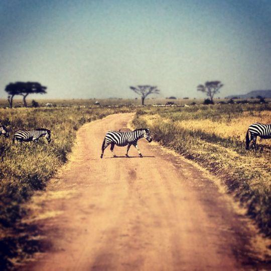Serengeti National Park in Arusha, Tanzania - International Honeymoon Packages   www.uhpltd.com   Universal Holidays Private Limited - Chennai,India.