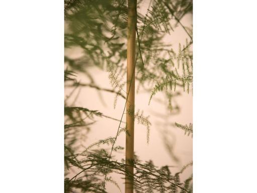 Orienta el crecimiento de tus plantas con los tutores de bambú, cuidando su aspecto estético a la vez que optmizas las condiciones de su desarrollo.
