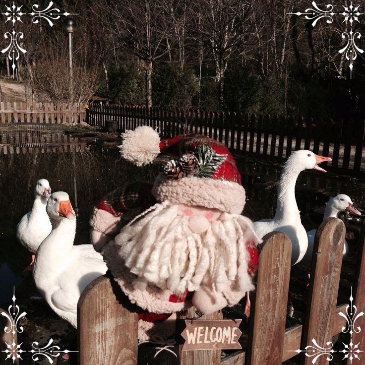 Ocas en Navidad