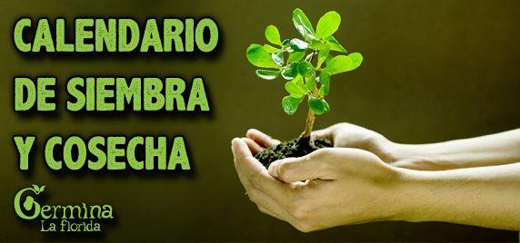 Les dejamos este muy útil calendario con lo básico para sembrar y cosechar las principales especies de hortalizas.