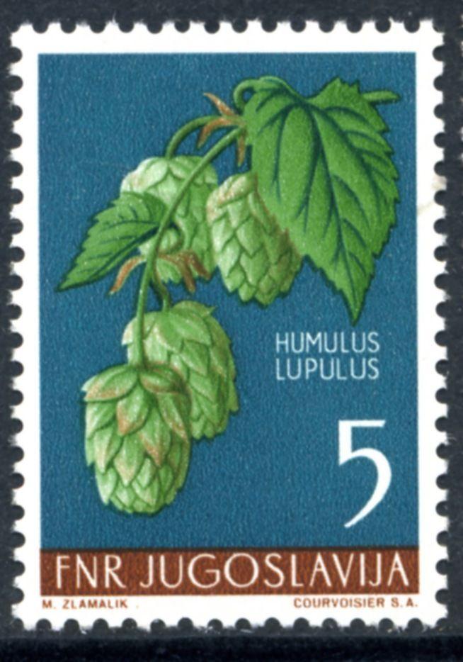 Yugoslavia,1955. Humulus lupulus