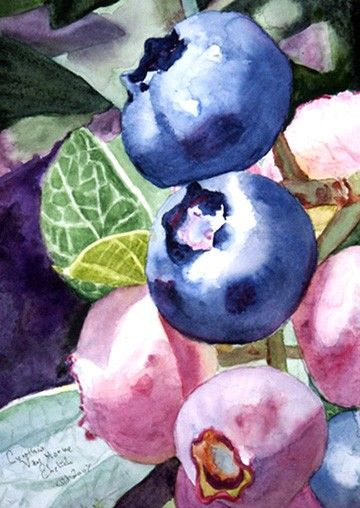 Cynthia VHEhrlich Original Watercolor Painting Blueberries In Pink and Blue Giclee Print
