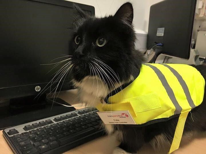 This Adorable Cat Just Got a Much Deserved Promotion