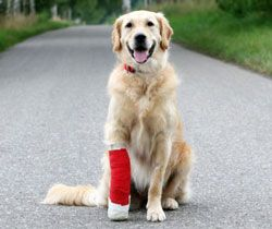 Pet First Aid Certification Online