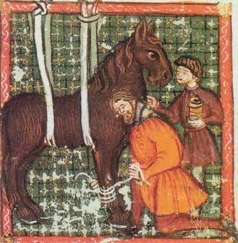 Die Miniatur aus einer illustrierten pferdeheilkundlichen Handschrift des Johan Alvares de Salamiellas aus dem 14. Jh. zeigt die Behandlung eines Bruchs des Röhrbeins, welches geschient und mit Werg umwickelt fixiert wird.