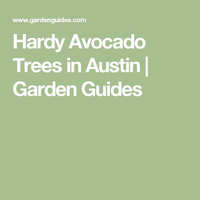 Hardy Avocado Trees in Austin | Garden Guides
