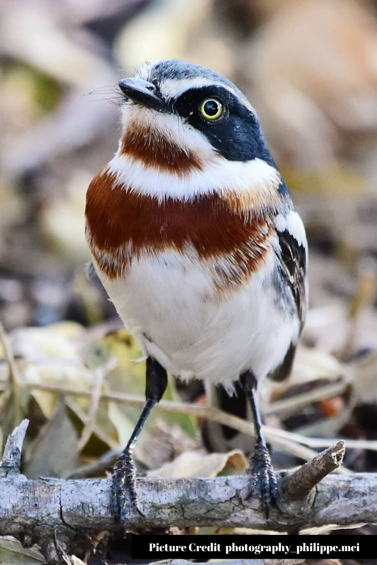 Top 25 Most Stunningly Beautiful Birds in the World