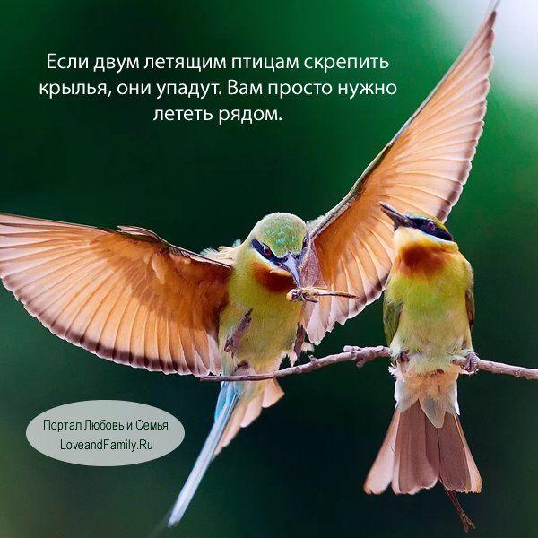 ❤️Если двум летящим птицам скрепить крылья, они упадут. Вам просто нужно лететь рядом.