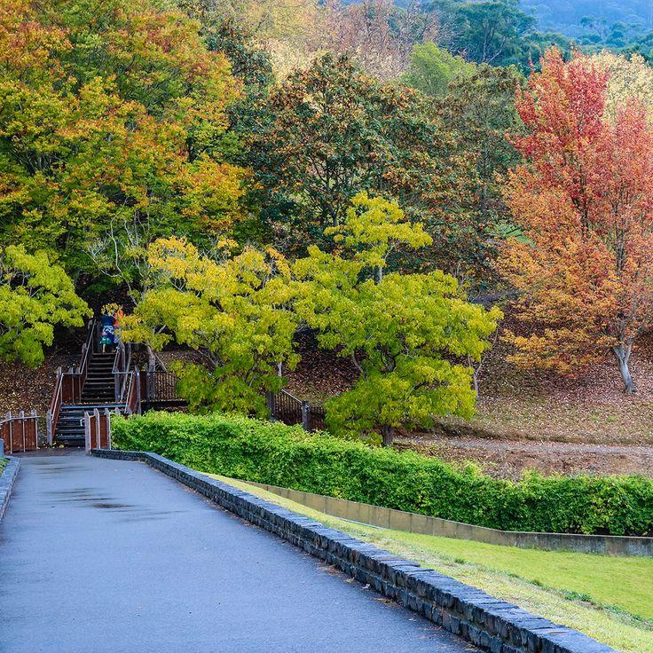 Free Nature Photo (Digital)- Mount Lofty Gardens Autumn Landscape http://momentsbycharlie.com/shop/free-products/free-nature-photo-digital-mount-lofty-gardens-autumn-landscape/?utm_campaign=coschedule&utm_source=pinterest&utm_medium=Moments%20by%20Charlie%20Blog%20and%20Online%20Shop&utm_content=Free%20Nature%20Photo%20%28Digital%29-%20Mount%20Lofty%20Gardens%20Autumn%20Landscape  The listed product is a free digital download.  The photo is of the Mount Lofty Gardens, South Australia…