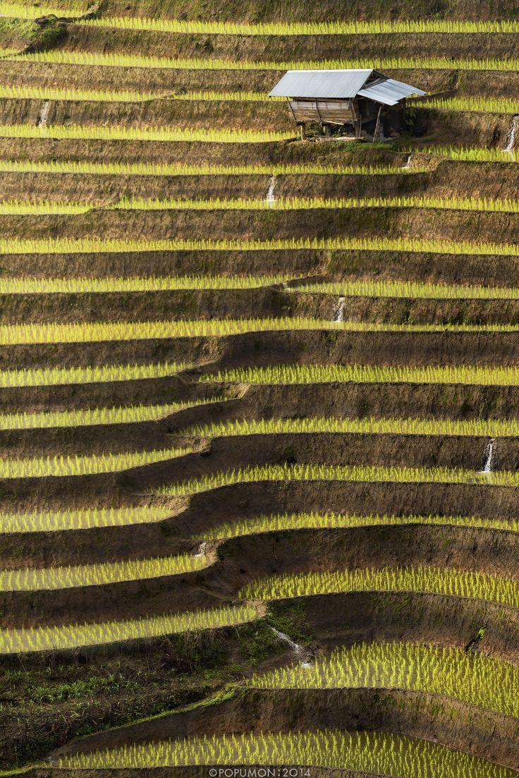Tailandia los campos de Arroz en Chiang Mai  Belleza absolutamente magnífica.