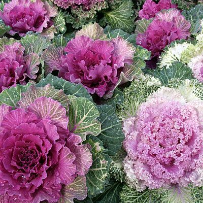 17 Best Plants For Cool Season Color
