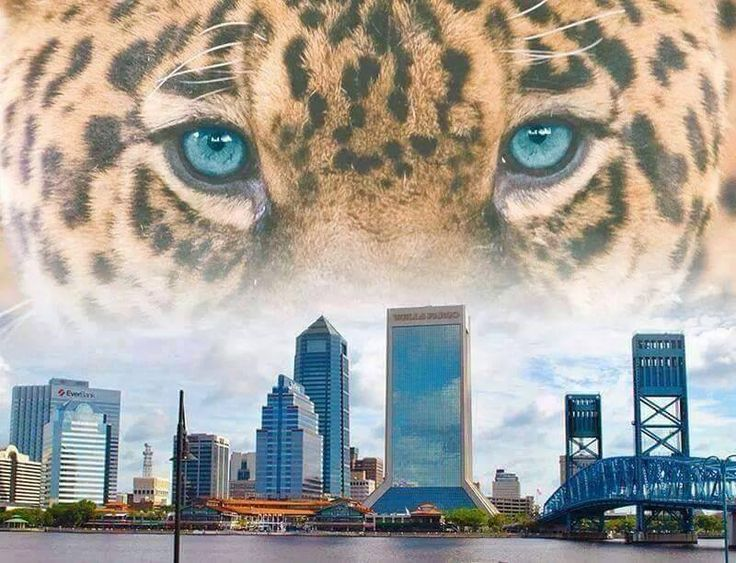 In what will be the BIGGEST Game EVER in Jaguar History, The Jacksonville Jaguars gained permission today to remove the Tarps at Everbank Field for the AFC Wild Card Playoff Game! The game date and time have not officially be released, But LockedIN Magazine is being told that around 4pm on  January 6, 2018 there will be a kick off at the stadium.