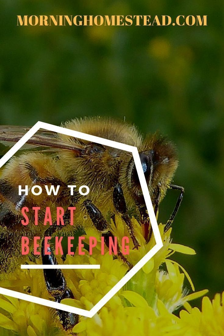 * Here are some common questions: how to start beekeeping ? how much does it cost to start beekeeping how to start a beehive in your backyard how to start a beehive without buying bees how to start beekeeping beginners starting a beehive from scratch keeping bees in a small garden keeping bees for beginners beekeeping for beginners pdf #beekeeping #bee #bees #honey #honeybee #beekeepingforbeginners #gardenforbeginnersbackyards #backyardbeekeeper