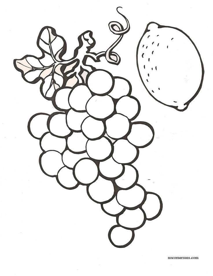 Contour Line Drawing Of Fruit : Images about coloring pages on pinterest